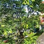 La cucina verde giardino e casa