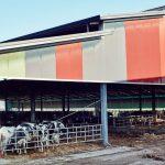 museo-della-merda-castelbosco-bovini_oggetto_editoriale_h495
